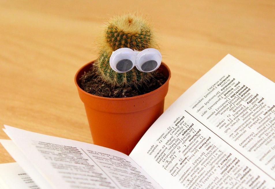 Как правильно посадить кактус в горшок